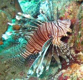 Marine Monster Mash: Lionfish