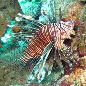 Marine Monster Mash:Lionfish