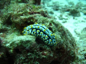 Photography Friday: Sea Slugs