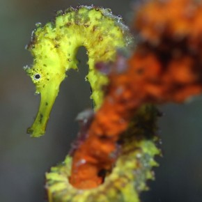 Photography Friday: Seahorse