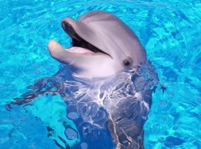 Loss of Protection for MarineAnimals?