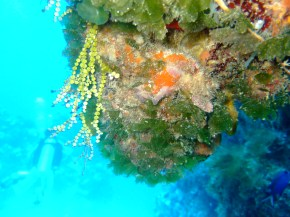 Photography Friday: Reef Degradation