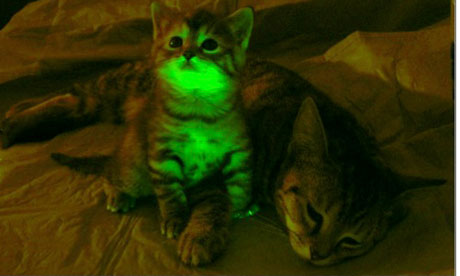 Glowing kittens > non-glowing kittens?