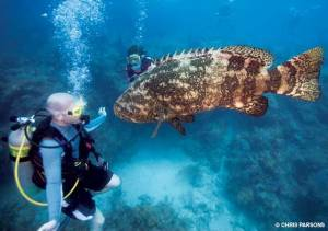 Image from http://www.alertdiver.com/Our-National-Marine-Sanctuaries