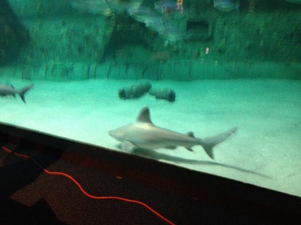 These guys were swimming around behind them