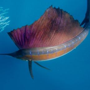 Ocean Organism Olympics