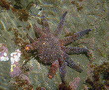 Starfish can grow their arms back. Can we?