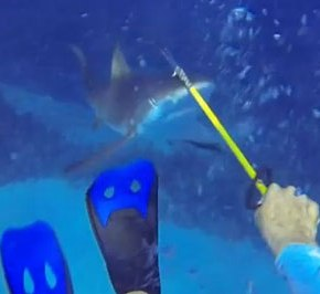 """Film Friday: Welcome to the Shark Circus (Gone Wrong)! When """"trained"""" sharksattack…"""