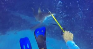 sharkattack-lionfish