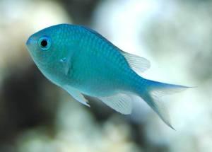 Image from http://www.marineaquariumsa.com