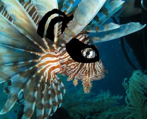 Are Lionfish Invisible to Prey?