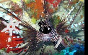 lionfish ninja1