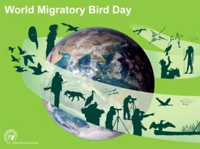 OverTheC for International Migratory BirdDay