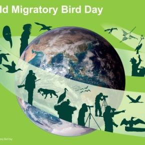 OverTheC for International Migratory Bird Day