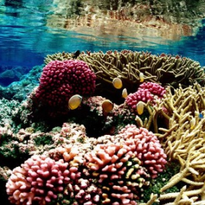 Marine Conservation in the News: Top 5 Things Everyone Should Know