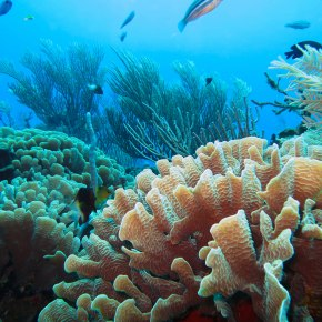 Can coral reef restoration savelives?