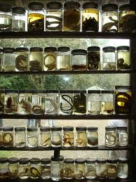Gotta Catch 'Em All? The ethics of specimen collection for scientific research