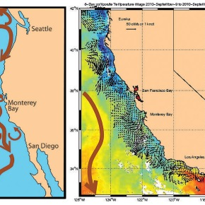 A Scientist at Sea: California Current Research Cruise (PartI)