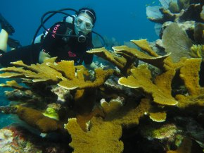Marine Ecology in Mexico: In the field with the Brunolab