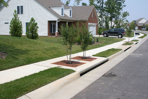 A bonus photo: two adjacent tree boxes.  Look for the gap in the curb that allows stormwater to enter the system.  Image from www.filterra.com.