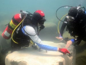 Checking out an ECOncrete block located in a harbor. Image from http://www.econcretetech.com/products/products.