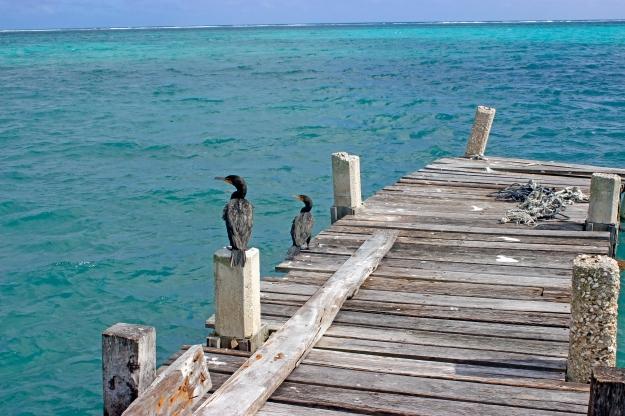 Cormorants (Credit: Joe Townsend)