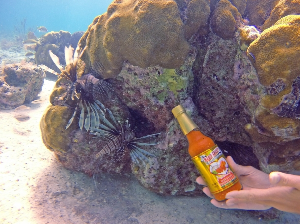 Lionfish. Marie Sharp's hot sauce bottle for scale. (Credit: Joe Townsend)