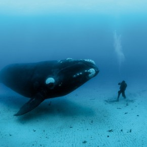 Can Whales Give us the Secret to LongLife?