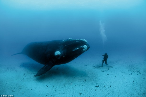 Tell us your secrets, oh great whale. And please don't eat me.