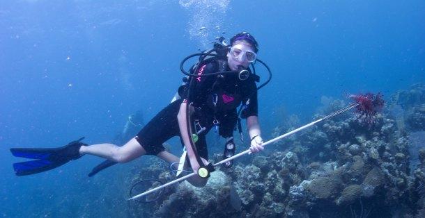 Serena lionfish