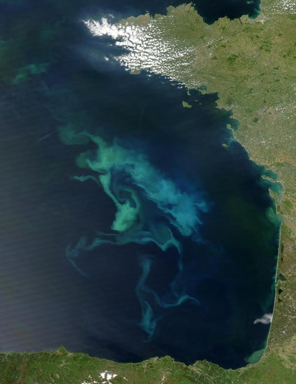 All that light blue/green stuff... yeah, that's phytoplankton. Visible from space! (commons.wikimedia.org(