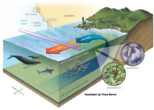 How upwelling occurs.