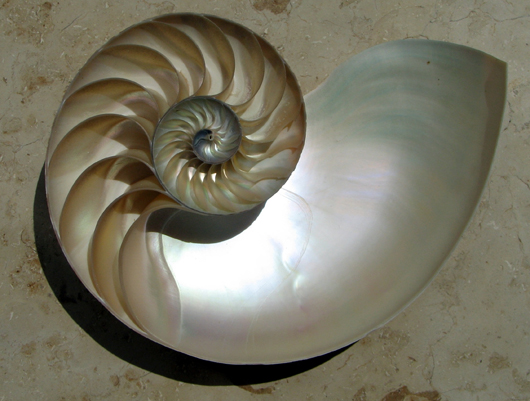 A chambered nautilus shell.  Don't you feel inspired to write some poetry just looking at it? Image from http://www.fws.gov/news/blog/index.cfm/2011/10/27/The-Chambered-Nautilus-More-than-Just-a-Pretty-Shell