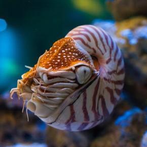 The Chambered Nautilus Beyond High SchoolEnglish