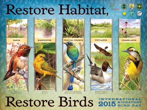 The official poster of IMBD 2015, highlighting the restoration theme. Image from http://resources.migratorybirdday.org/