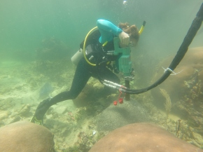 What I did this summer: how corals can teach us about climate (Castillo Lab Field Work 2015)