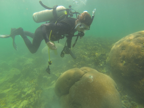 Me attempting to place a concrete plug into a coral. (Photo Credit: Sarah Davies)