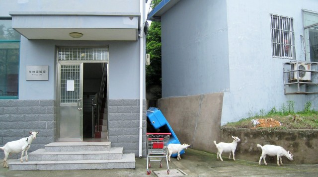And then sometimes there are goats in front of the biology lab. So many unforgettable memories!