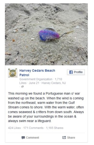 A tweet from a Jersey shore town alerts visitors to a recent man o' war sighting.  Image from http://www.nbcnews.com/news/us-news/toxic-man-war-jellyfish-invade-jersey-shore-time-holiday-weekend-n384591