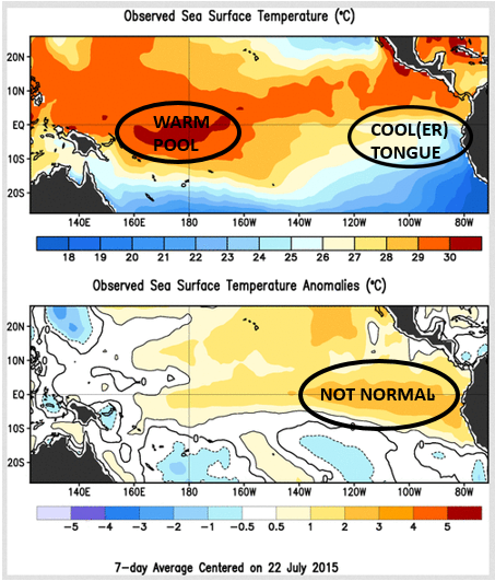 Most recent data from the Climate Prediction Center. You can actually see the warm pool in the Western Pacific and the cool(er) tongue in the Eastern Pacific (top figure). The bottom figure shows the temperature anomalies. You can see how much warmer the Eastern Pacific is compared to 'normal' (aka: El Nino is here!).