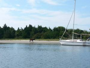 A resident of Carrot Island, located near IMS. Photo by Larisa Bennett.