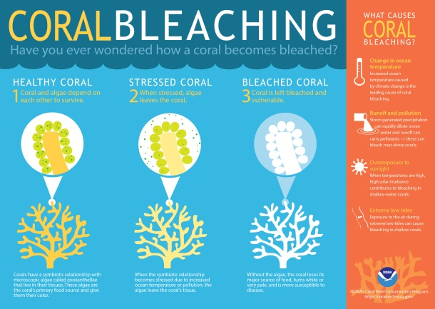 coral bleaching infographic-final