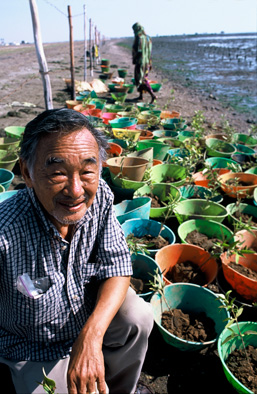 Gordon Sato poses with mangrove saplings awaiting planting. Photo by Heine Pederson (Rolex Awards), from http://www.rolexawards.com/profiles/laureates/gordon_sato/photos__videos