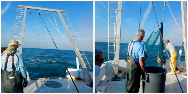 Left: Trawling for bait to put on the longline to catch some sharks. Right: Pulling up the trawling net to see what we caught. Photos by Kelsey Barnhill.