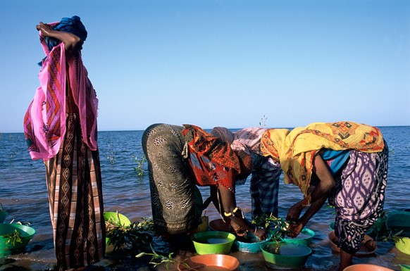 Local women hired to plant the mangrove saplings along the Eritrean coastline. Photo by Heine Pedersen (Rolex Award) from http://www.rolexawards.com/profiles/laureates/gordon_sato/photos__videos