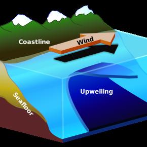 Visualizing Upwelling