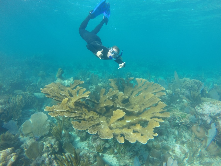 Lab tech Kathryn Cobleigh checking out a beautiful piece of Belizean fore reef (no corals were harmed in the taking of this picture)