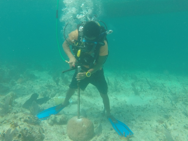 Community researcher Anthony Rash drilling a coral.