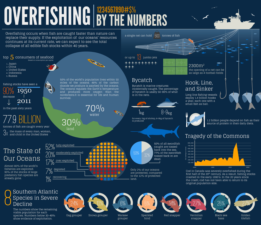 """the effect of overfishing bluefin tuna """"overfishing has depleted the population of pacific bluefin tuna to less than 3 percent of its historic size the continued lack of action on catch reduction means that recovery of this population is decades away at best, a situation that is bad for japanese fishermen as well as consumers."""
