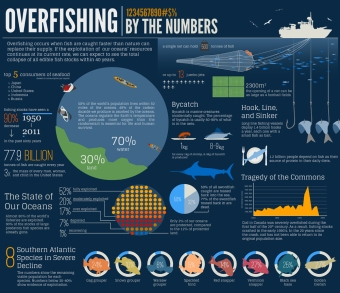 overfishing-infographic